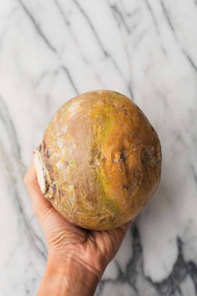 Hand holding rutabaga vegetable to show size