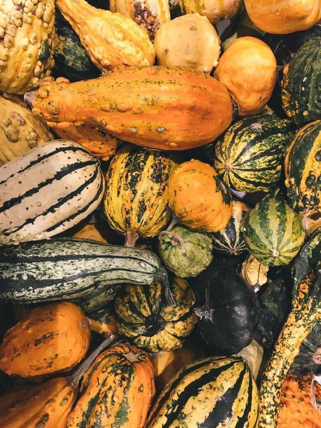 Seasonal fall vegetables - squash and pumpkins